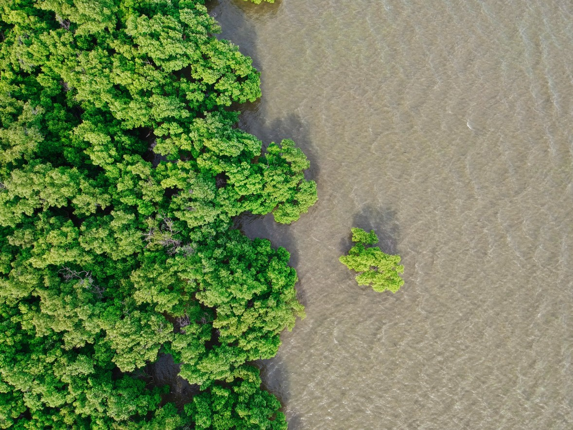 7 Facts You Might Not Know About Mangroves