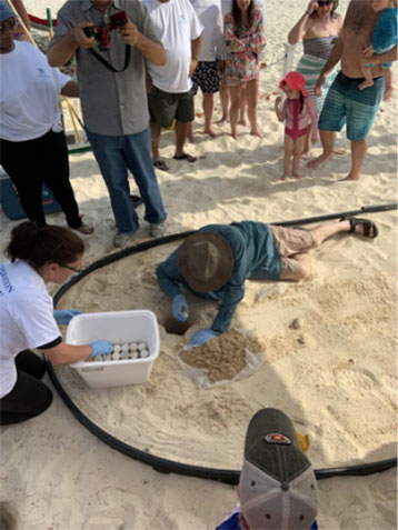 Egg Translocation & Nest Implantation - A Green Turtle Release Programme