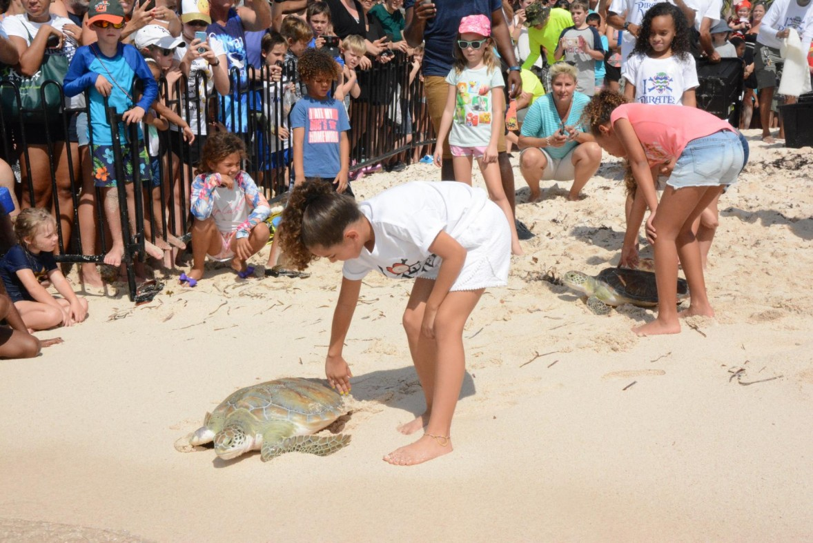 Pirates' Week Release Marks Turtle Centre's 50th Anniversary