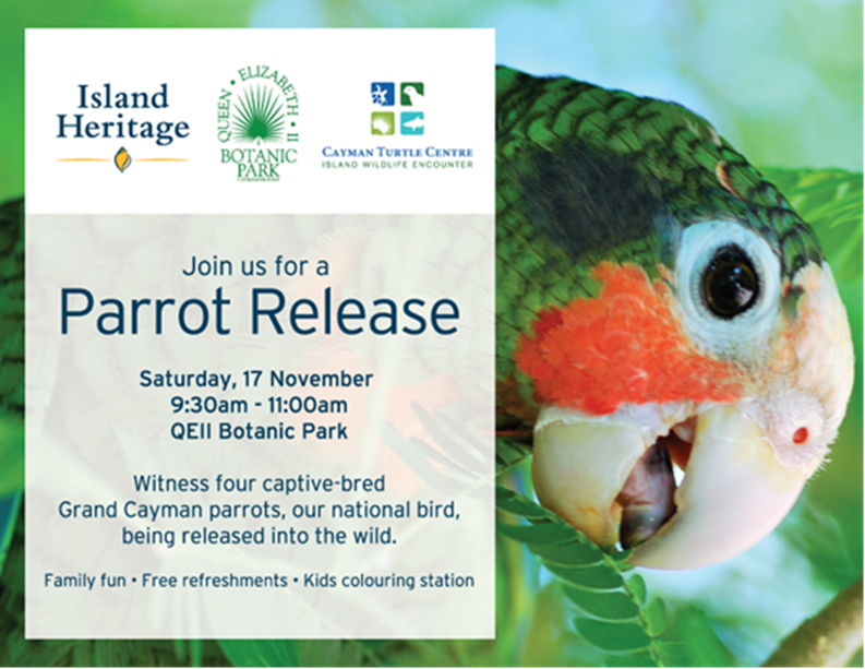 Parrot Release in collaboration with the Island Heritage insurance