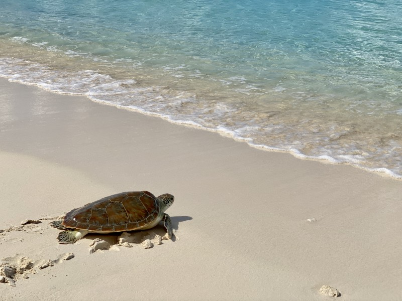 World Animal Day Turtle Release