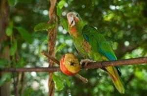 Parrot Wildlife in Cayman