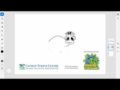 Directed Drawing Series by Cayman Turtle Centre - Baby Turtle