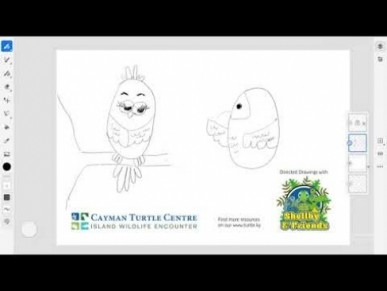 Directed Drawing Series by Cayman Turtle Centre - Parrot Part - 2