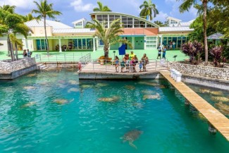 Cayman Turtle Centre announces reopening