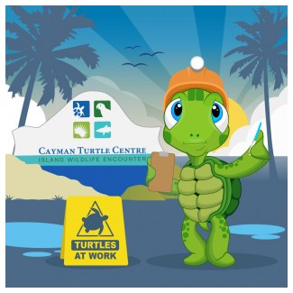 Cayman Turtle Centre gets ready to open its doors to the public