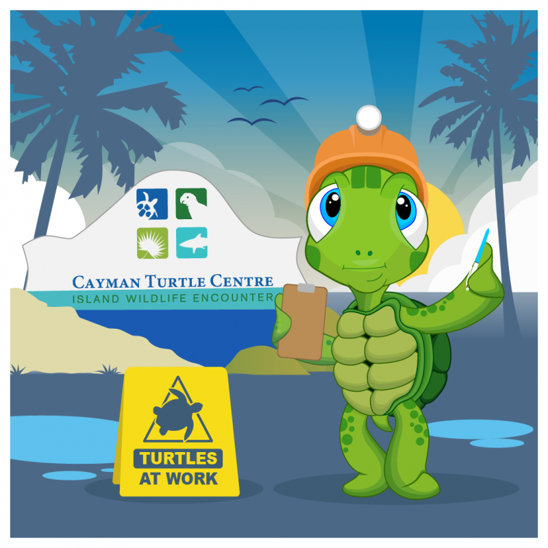 Cayman Turtle Centre prepares to re-open this weekend after Hurricane Grace clean-up