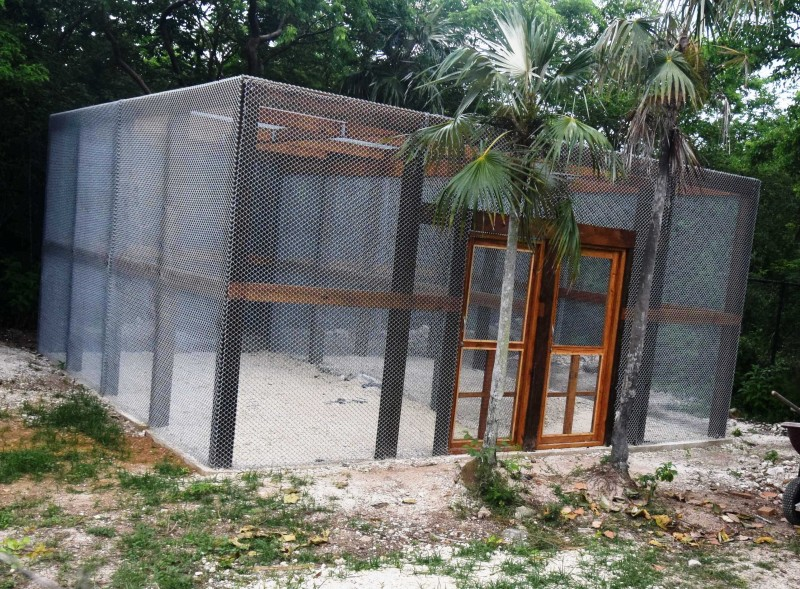Big news from CTC's Caribbean Free Flight Aviary