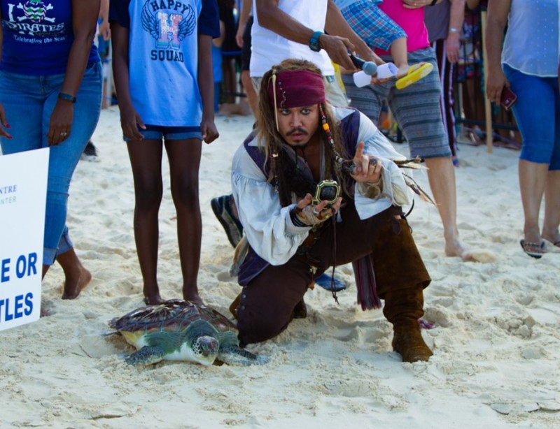 Annual Pirates Week Turtle Release Goes Virtual