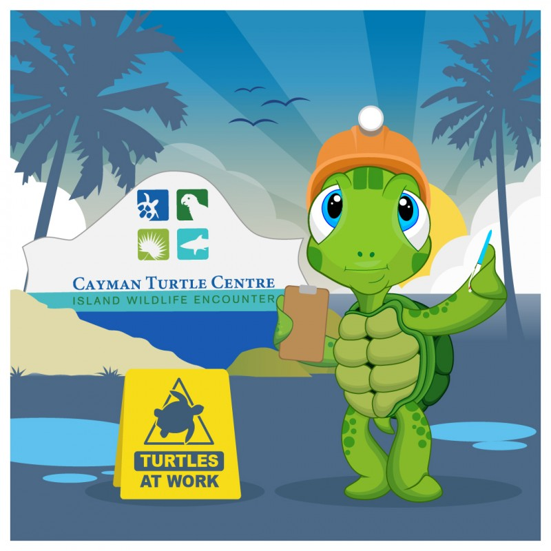 Cayman Turtle Centre prepares to re-open to the public
