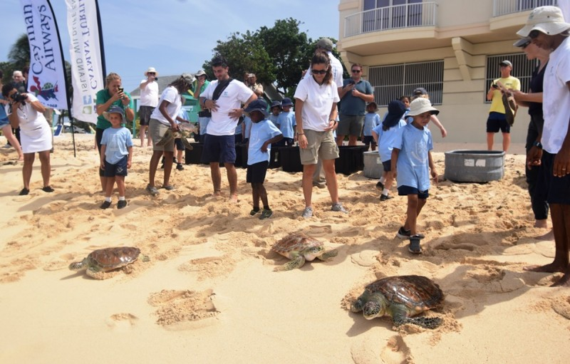 Turtle Centre release kicks off  World Oceans Day celebrations