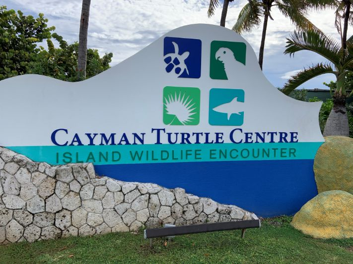 Cayman Turtle Centre park attraction temporary closure - COVID-19 update