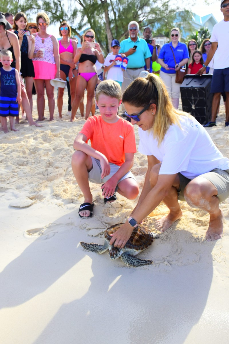 Cayman Turtle Centre to Celebrate World Sea Turtle Day with releasing Turtles into the Sea