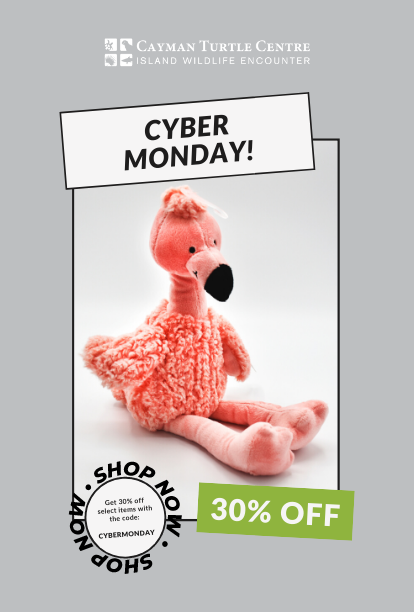 https://www.turtle.ky/cache/Offers/414_414/Cyber_Monday_Web.png