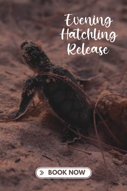 https://www.turtle.ky/cache/Offers/414_414/Evening_Hatchling_Release_Website.png