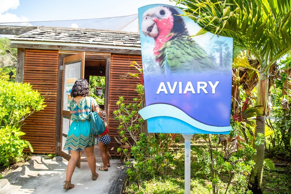 Welcome to the Aviary