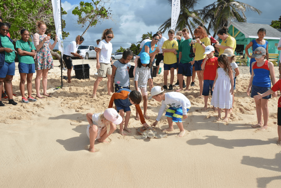 Turtles Released by School Students - Image 3