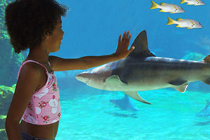 Sharks in Touch Tanks
