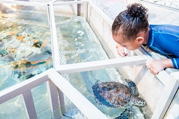 Get a holf of Turtles from Turtle tanks
