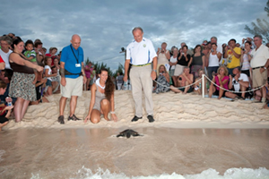 Releasing the Turtles back into the ocean